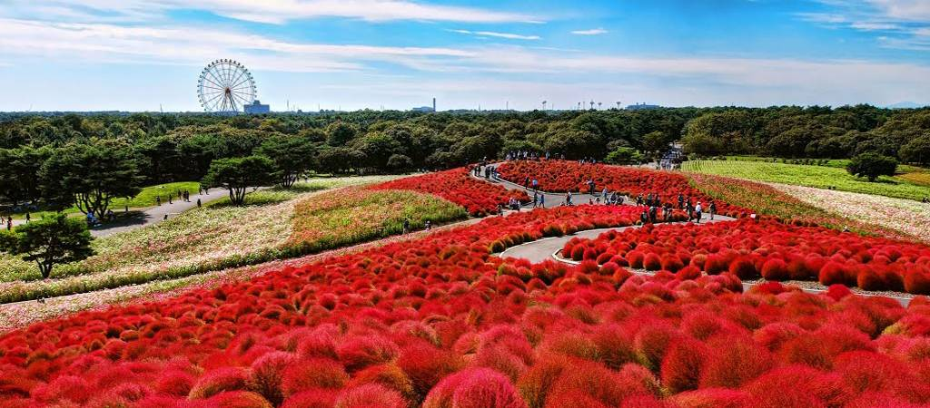 Hitachi Seaside Park Japan Tech And Facts