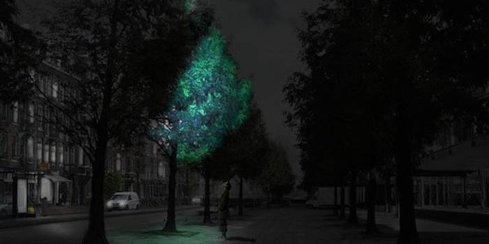 Bioluminescent Tree