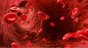 blood-main