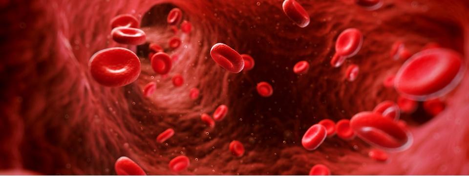 Сахар крови и его происхождение