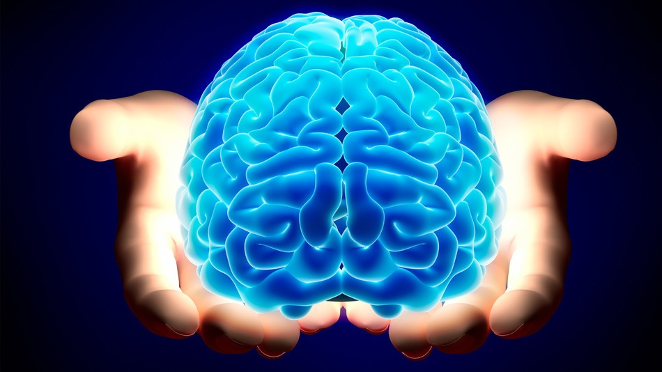 15 awesome facts about brain | tech and facts, Cephalic Vein